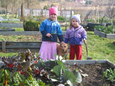 Community produce gardens established with official support and maintained by local groups have great potential as a response to food supply problems. (Photo Miriam Herzfeld)