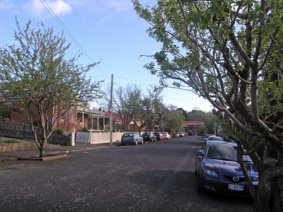 STREET FOOD: Almond trees in Greenlands Avenue, Sandy Bay, planted in the 1980s by the Hobart City Council