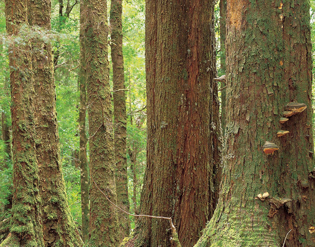 Financial reward is in prospect for retaining forests as living carbon stores. PHOTO ROB BLAKERS