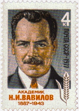Vavilov's image on a USSR postage stamp in 1977, 34 years after his death in prison. SOURCE WIKIPEDIA