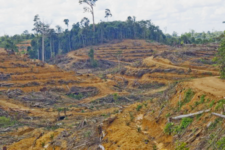 "Clearfelled forest in Indonesia. Australia's carbon pricing scheme aims to limit our own abatement by paying for abatement measures in other countries, such as ""avoided deforestation"" in Indonesia. PHOTO CHINA DAILY"