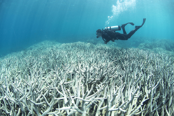 CAPTION: Coral bleaching off Heron Island, near the southernmost point of the Great Barrier Reef, in February this year. PHOTO XL Catlin Seaview Survey